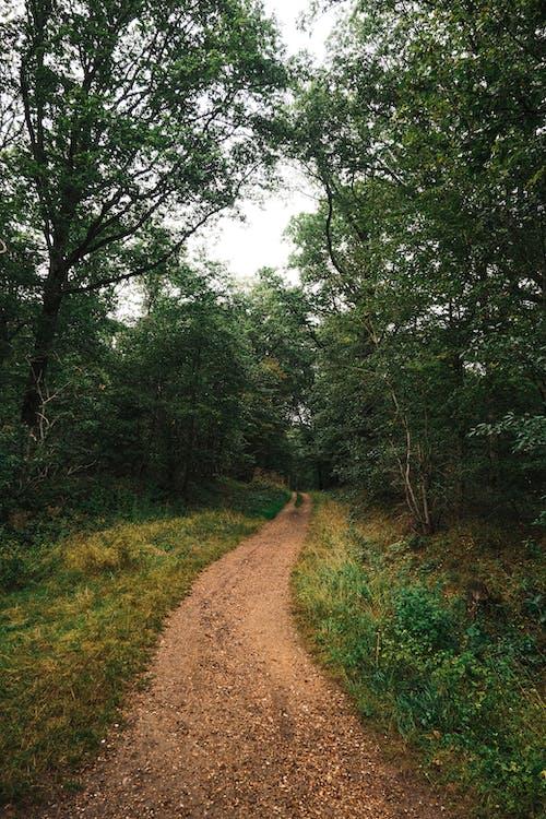 걷기, 경치, 계절의 무료 스톡 사진
