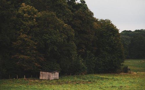 가벼운, 가을, 경치의 무료 스톡 사진