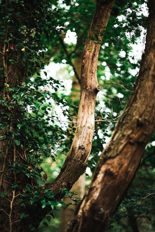 가을, 가지, 경치의 무료 스톡 사진