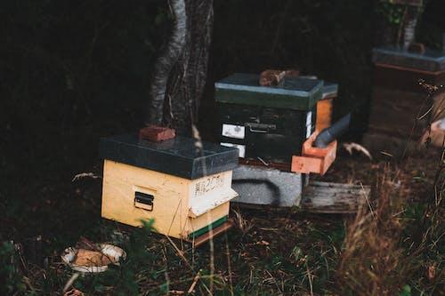 곤충, 군대, 군사의 무료 스톡 사진