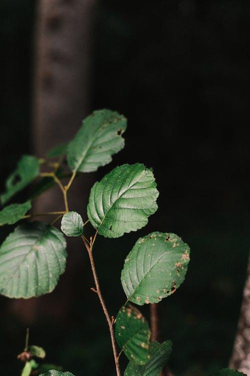 가지, 나무, 덩굴의 무료 스톡 사진