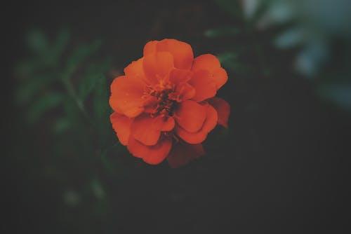 bahçe bitkisi, bahçe çiçeği, Blurr, bulanık içeren Ücretsiz stok fotoğraf