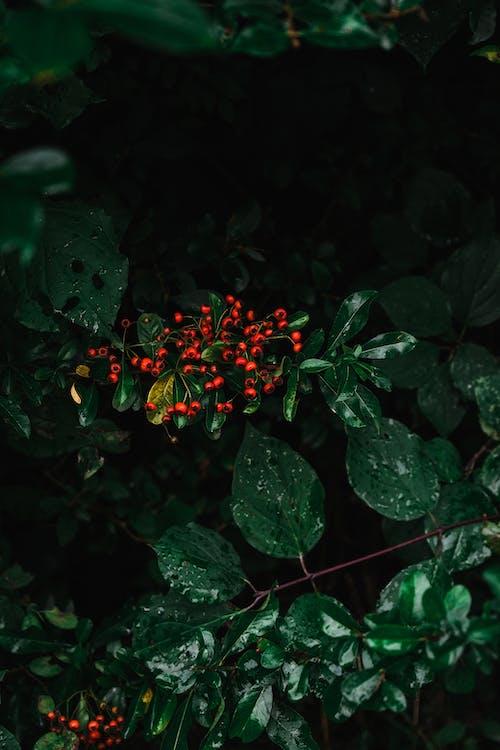 가을, 가지, 과일의 무료 스톡 사진