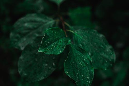 H2O, 가벼운, 가을의 무료 스톡 사진