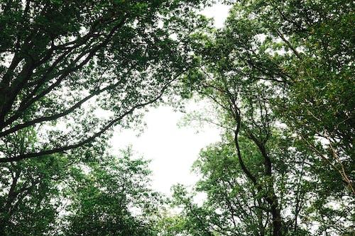 가지, 경치, 계절의 무료 스톡 사진