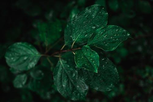 꽃, 나무, 담쟁이덩굴의 무료 스톡 사진