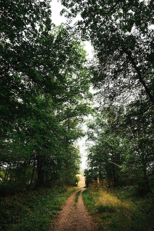 가벼운, 가지, 경치의 무료 스톡 사진