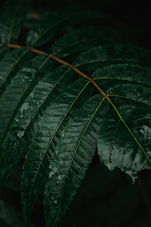 가벼운, 가을, 관념적인의 무료 스톡 사진