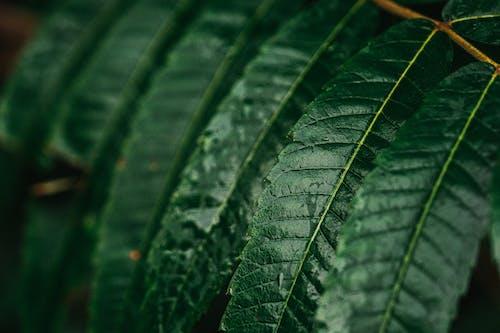 가벼운, 관념적인, 나무의 무료 스톡 사진