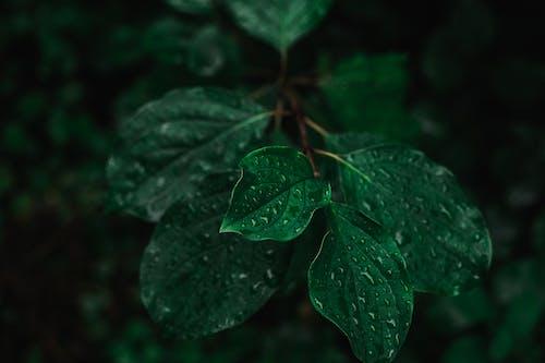 가벼운, 꽃, 나무의 무료 스톡 사진
