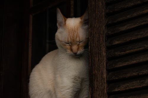 Základová fotografie zdarma na téma 8k tapety, kočka, líný