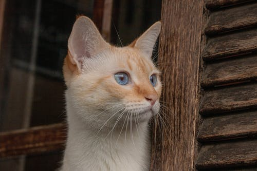 Základová fotografie zdarma na téma 8k tapety, kočičí obličej, kočka