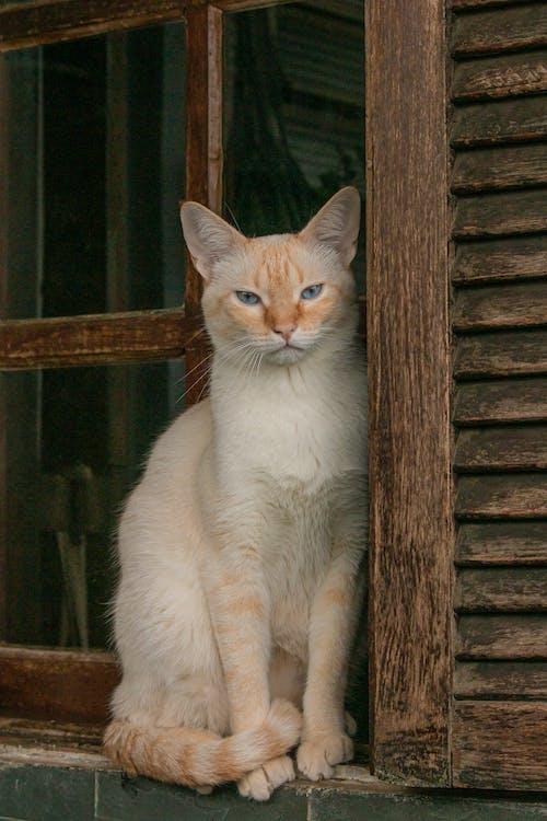 Základová fotografie zdarma na téma 8k tapety, kočka
