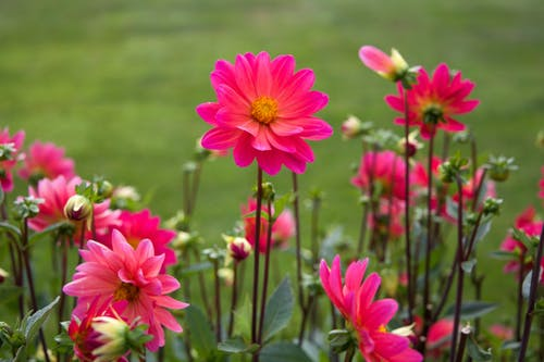 Безкоштовне стокове фото на тему «HD шпалери, завод, квіти, Природа»