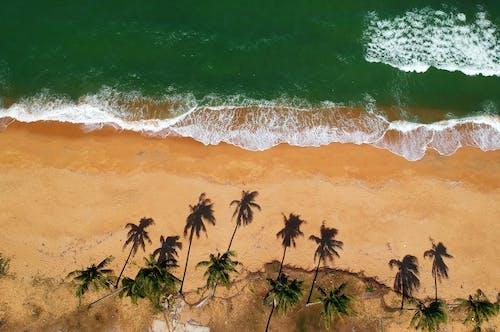 Fotobanka sbezplatnými fotkami na tému borovice, breh, krajina, krajina pri mori