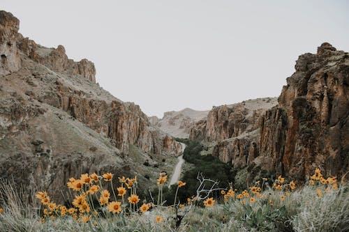 Yellow Flowers Near Brown Rocky Mountain