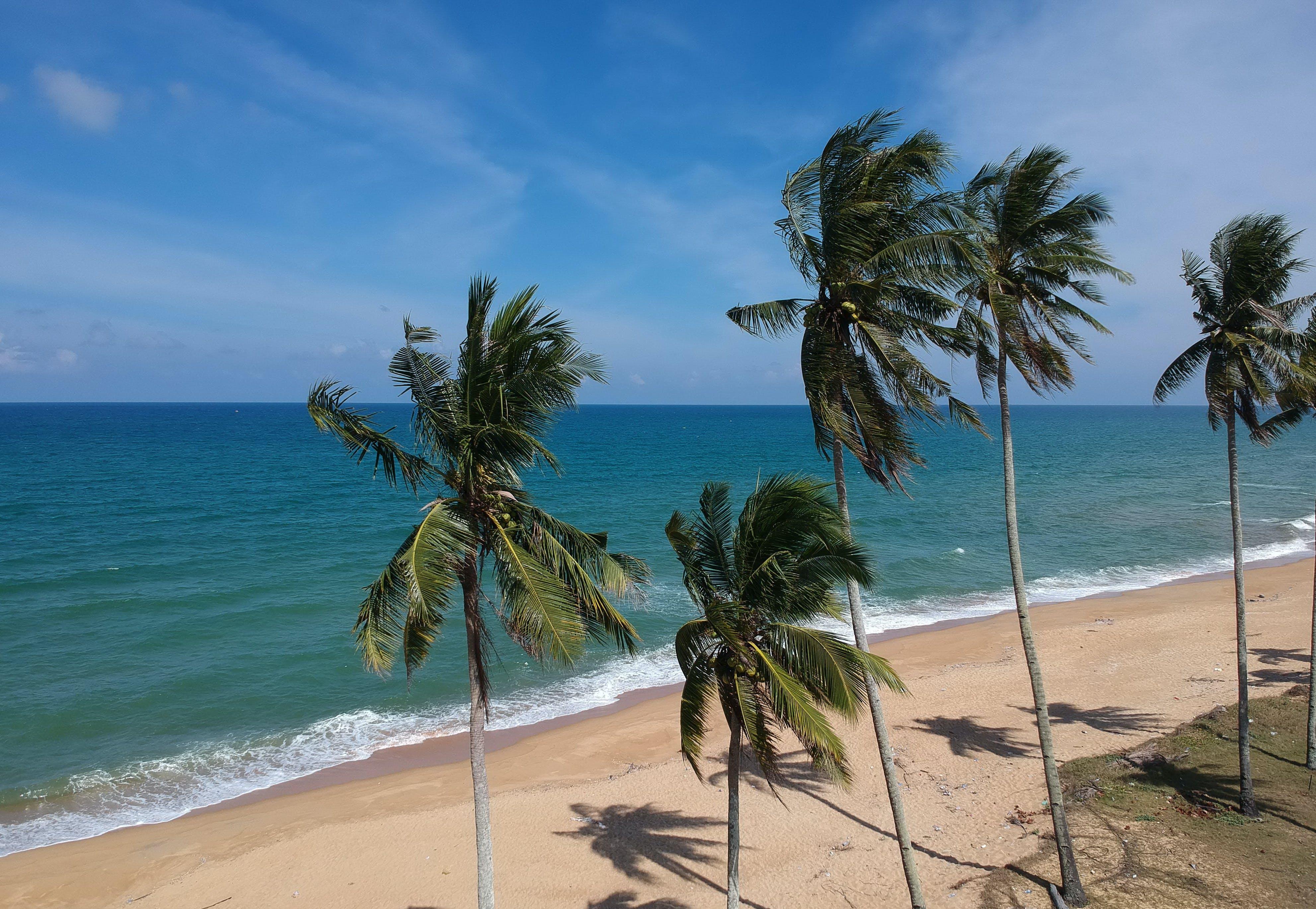 Foto profissional grátis de à beira-mar, água, areia, árvores