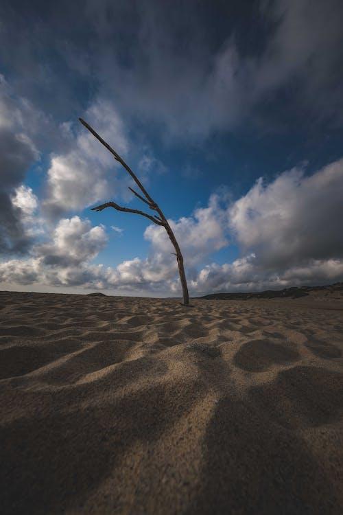 Δωρεάν στοκ φωτογραφιών με αμμόλοφος, άμμος, απόγευμα