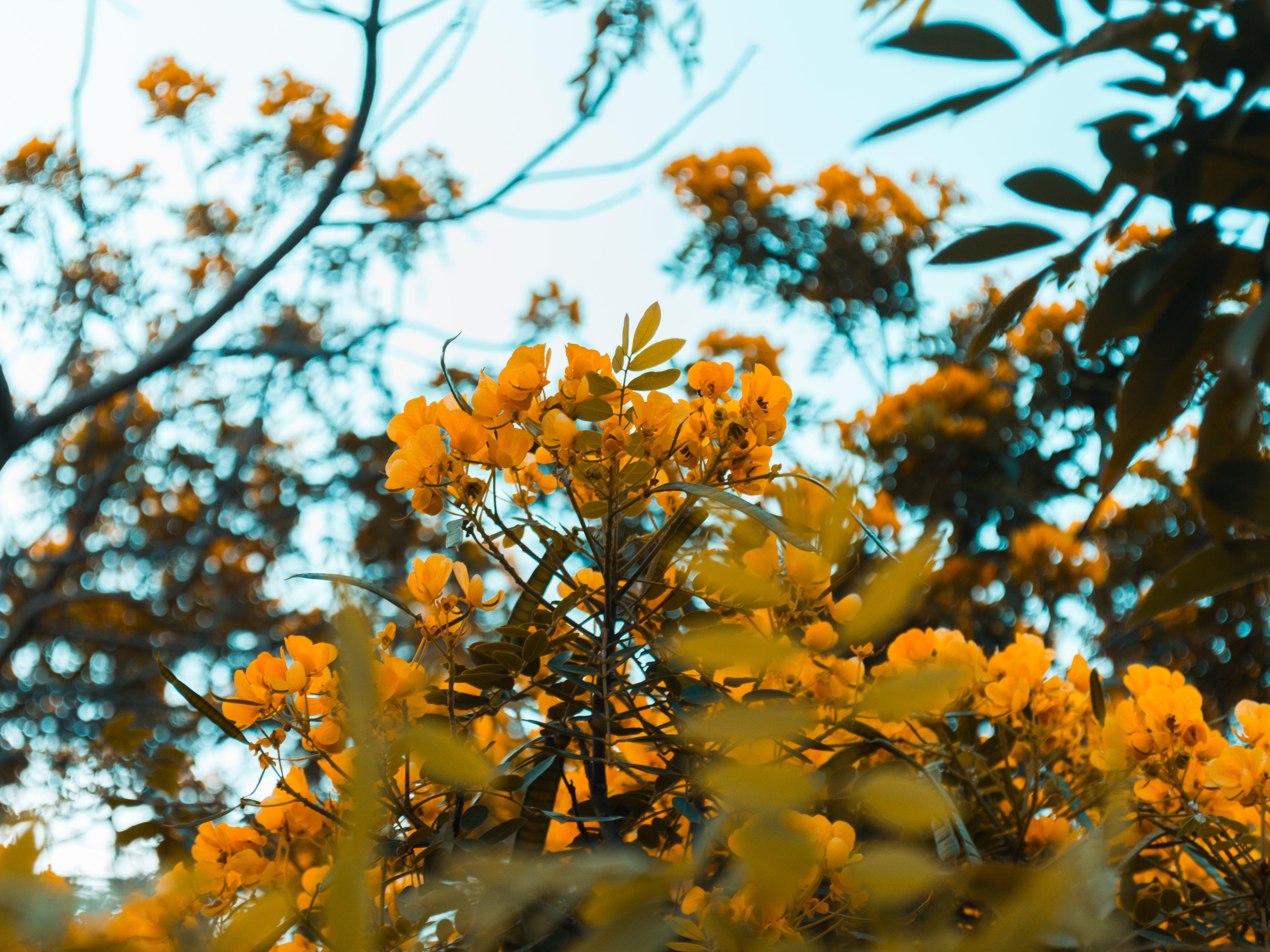 Free stock photo of flowers, macro, macro photography, nature