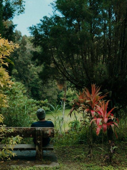 Fotos de stock gratuitas de al aire libre, amanecer, amante de la naturaleza
