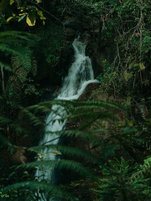 Fotos de stock gratuitas de agua, al aire libre, amante de la naturaleza