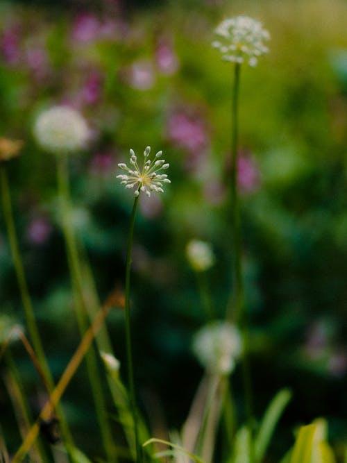 Fotos de stock gratuitas de al aire libre, amante de la naturaleza, belleza en la naturaleza