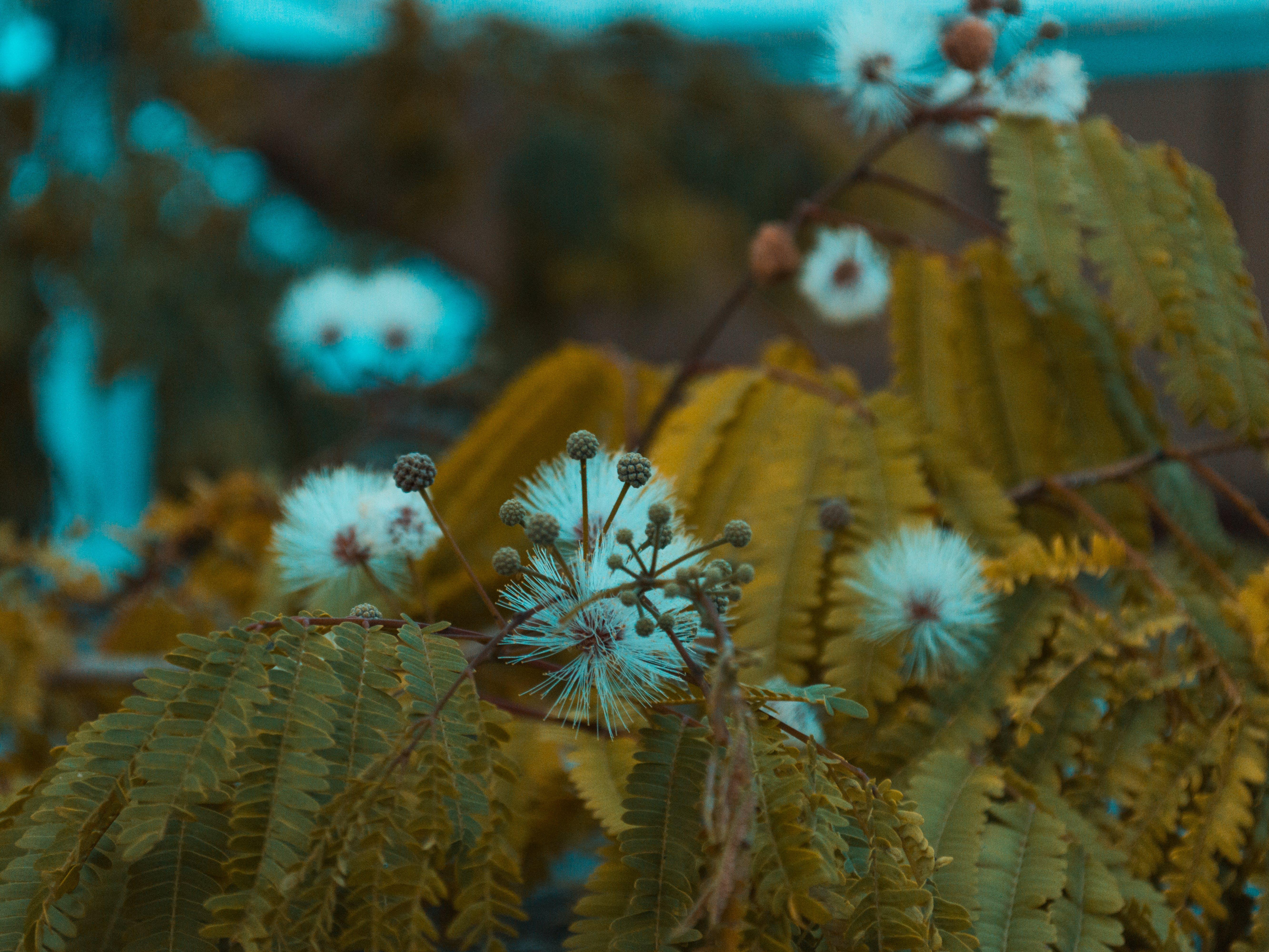 Δωρεάν στοκ φωτογραφιών με macro, nikon, μακροφωτογράφιση, φύση