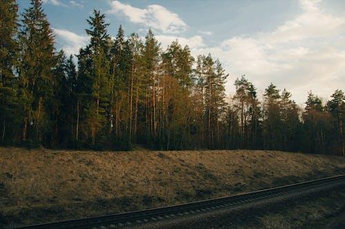Бесплатное стоковое фото с вечнозеленый, деревья, железная дорога, железнодорожная линия