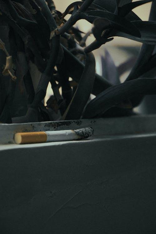 Základová fotografie zdarma na téma b kouř aby to bylo skutečné, b kouří nadjezd, b kouří prach 2