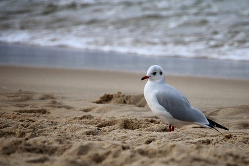White and Gray Bird on Brown Sand Near Body of Water
