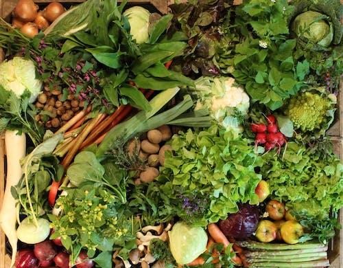 Free stock photo of fresh food, harvest, seasonal vegetables