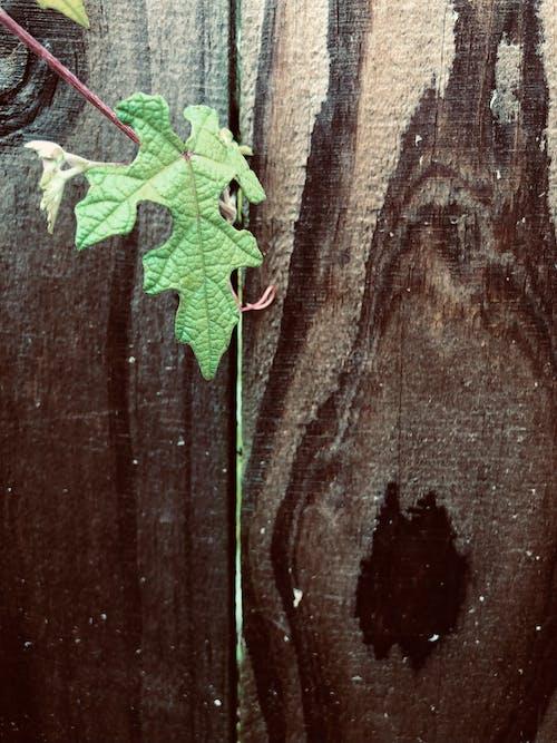 天性, 性質, 木柵欄 的 免費圖庫相片