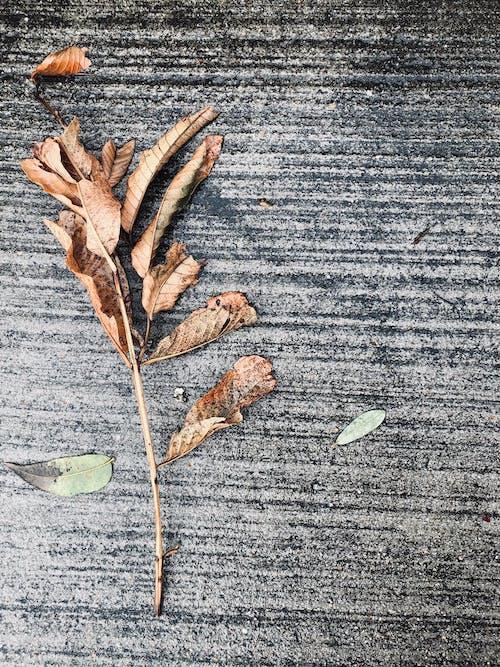 棕色, 水泥, 混凝土地面 的 免費圖庫相片