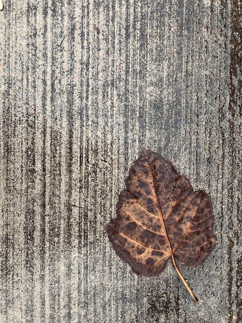 混凝土地面, 灰色混凝土, 秋葉 的 免費圖庫相片
