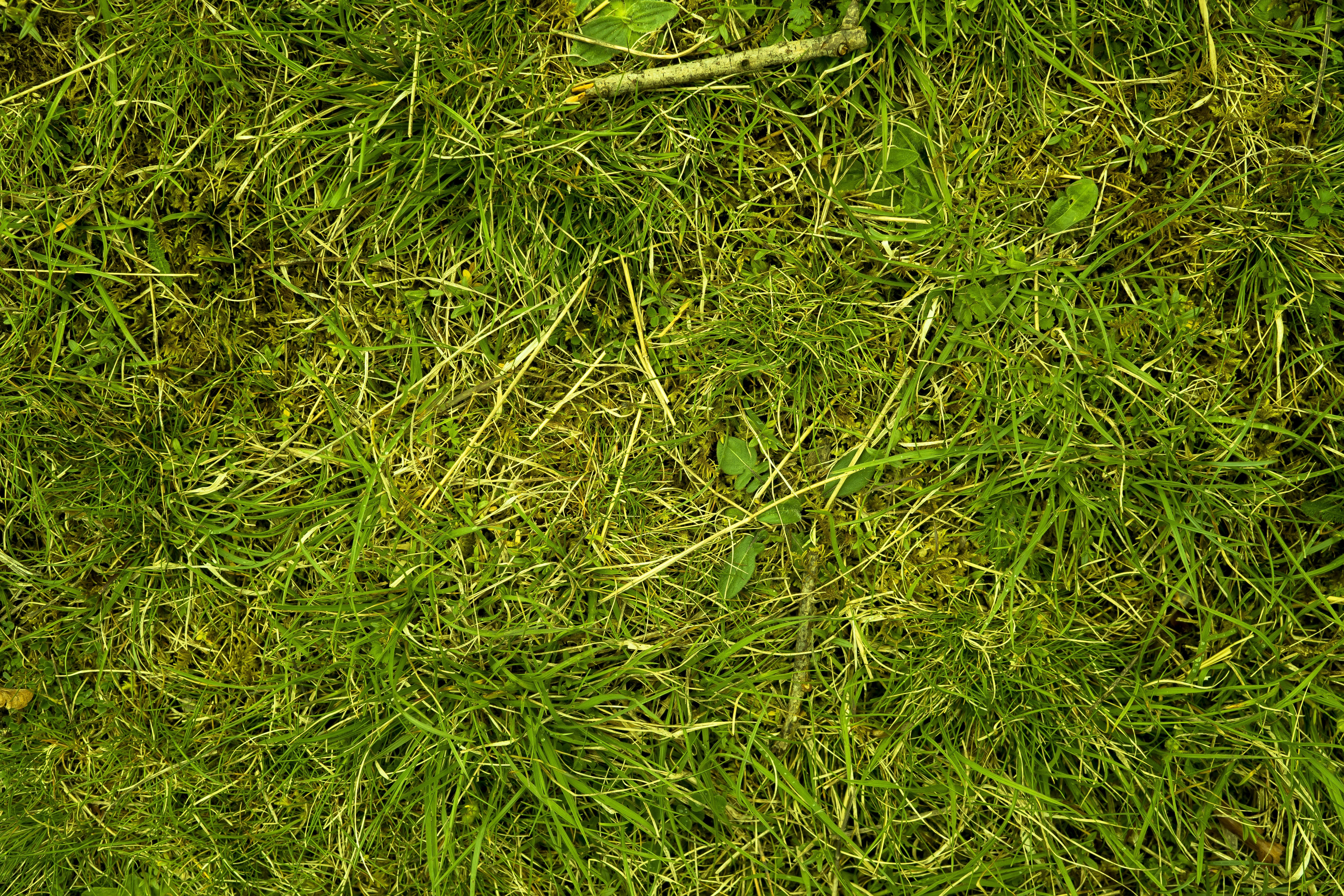 Free stock photo of background, blade of grass, close, grass