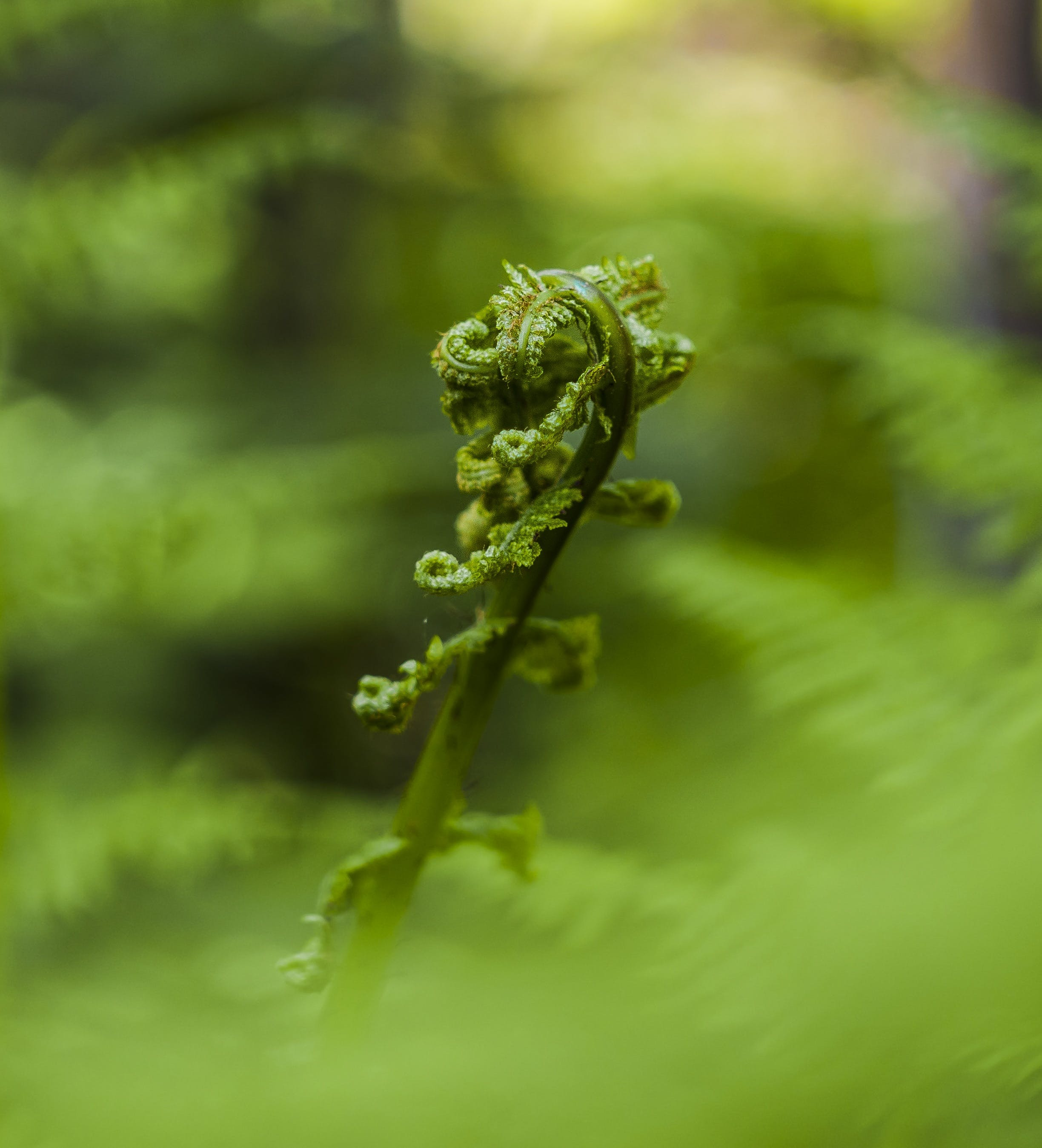 Free stock photo of close, fern, first drive, forest