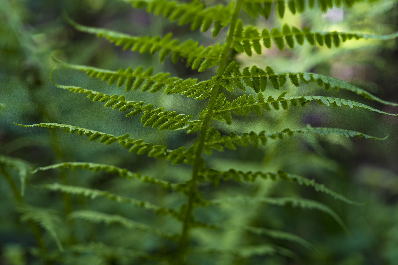 of close, fern, ferns, forest