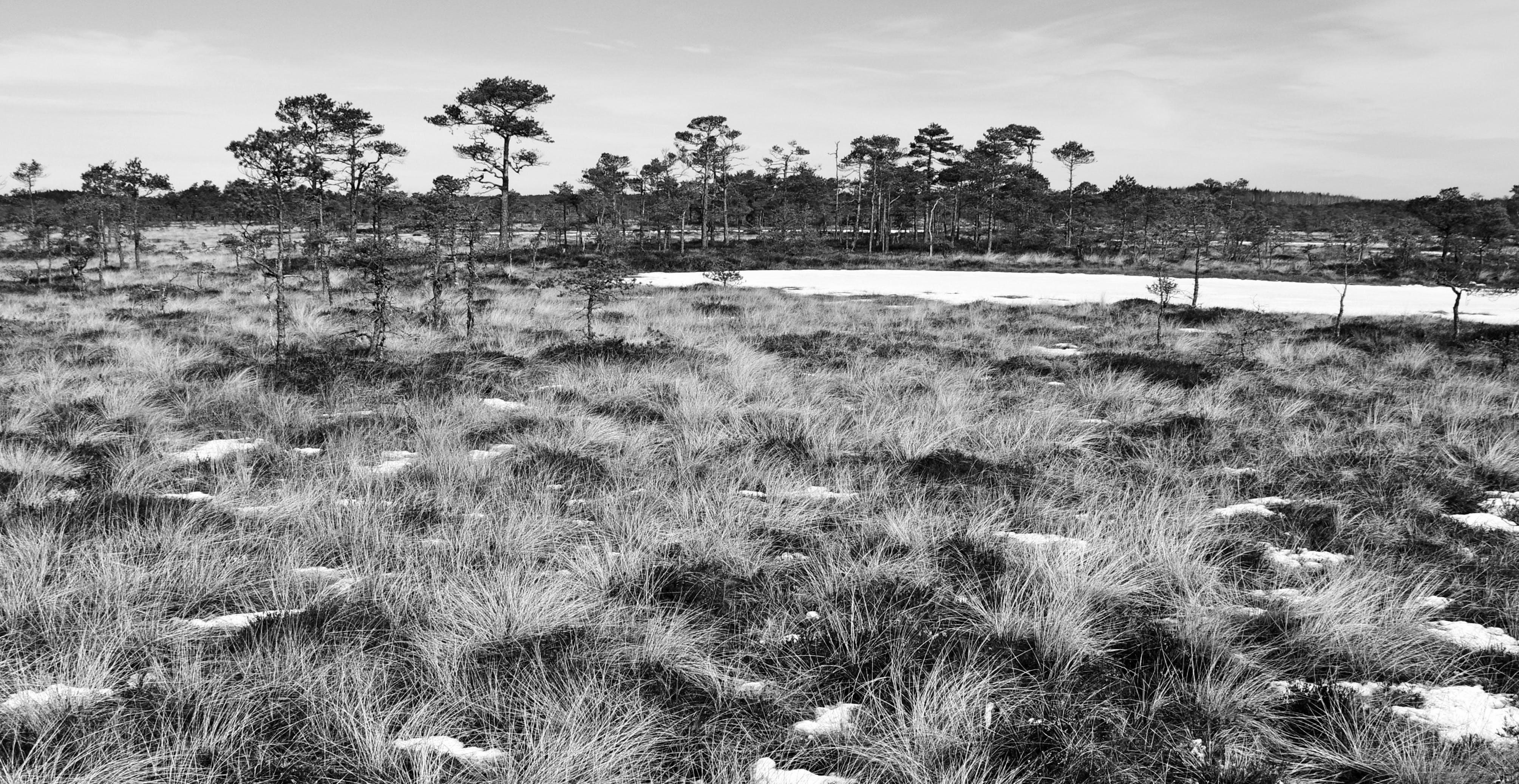 Immagine gratuita di alberi, ambiente, bianco e nero, campo
