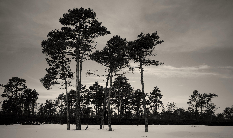 Immagine gratuita di alberi, ambiente, bianco e nero, boschi