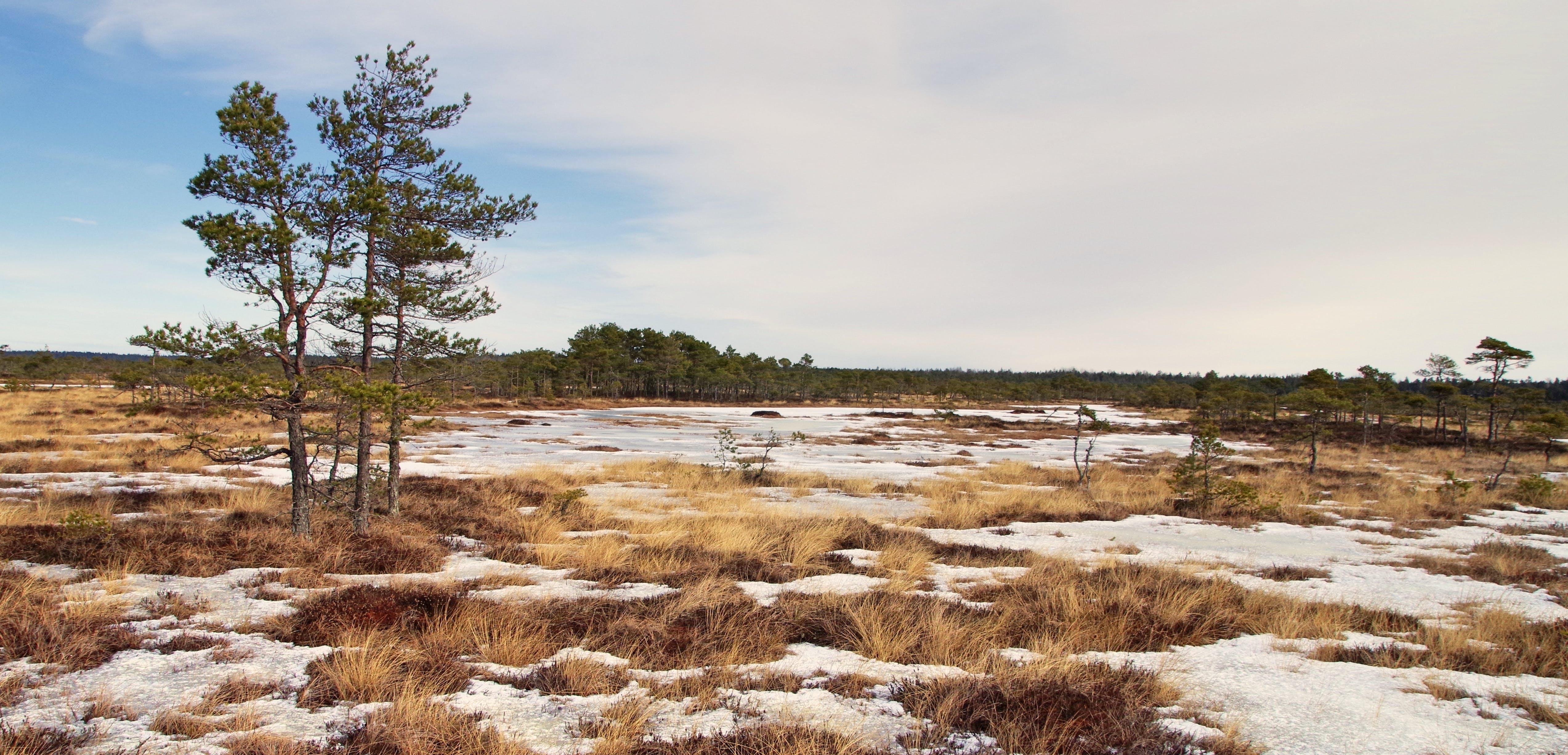 Foto profissional grátis de árvores, cênico, céu, com frio