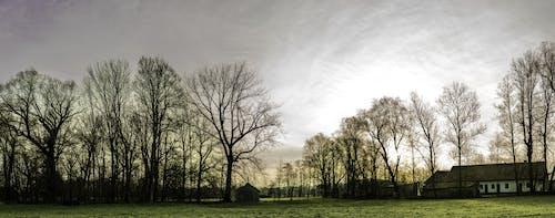 morgenstimmung, 全景, 天性, 天空 的 免費圖庫相片