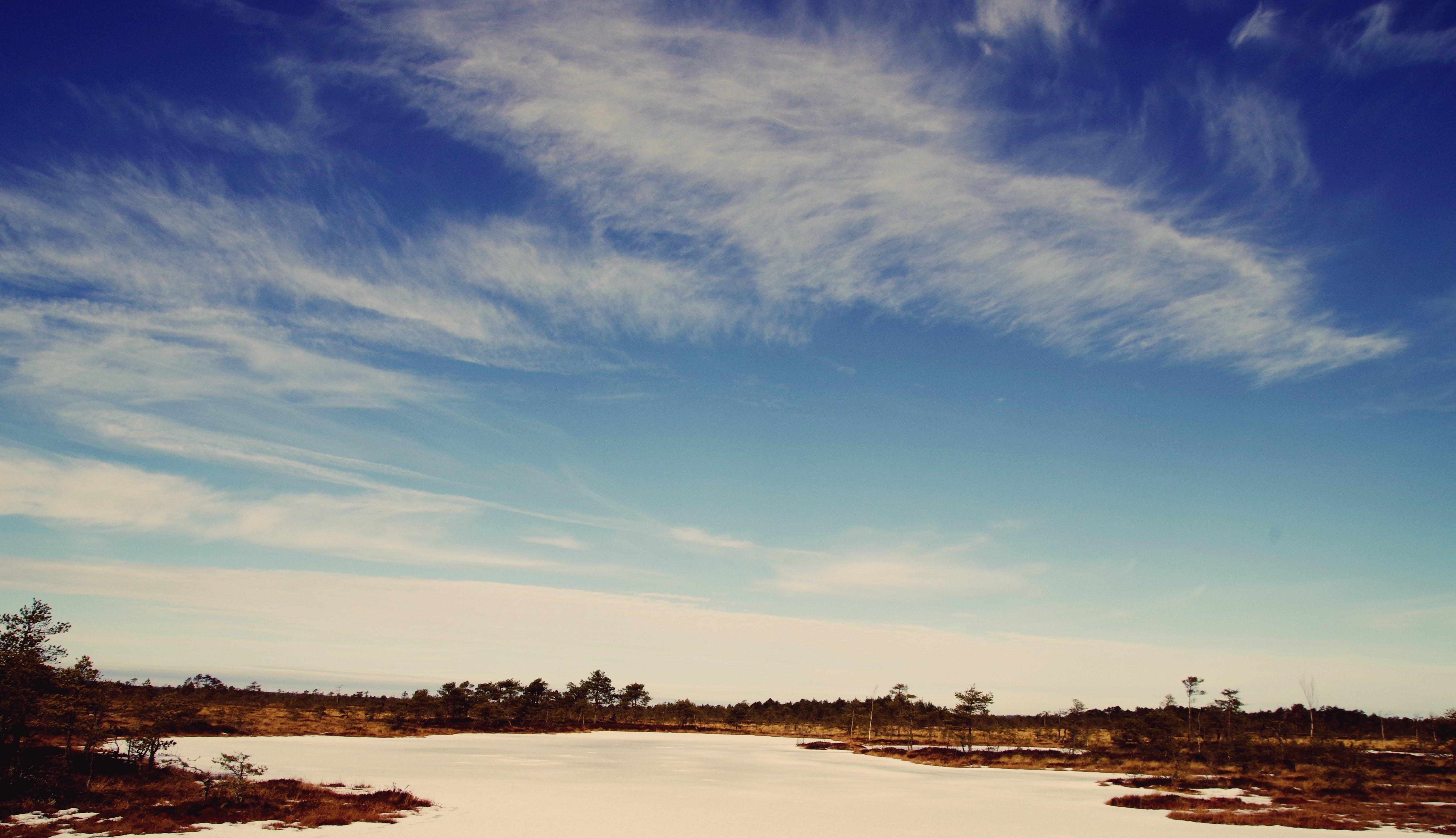 Foto profissional grátis de água, alvorecer, árvores, céu azul