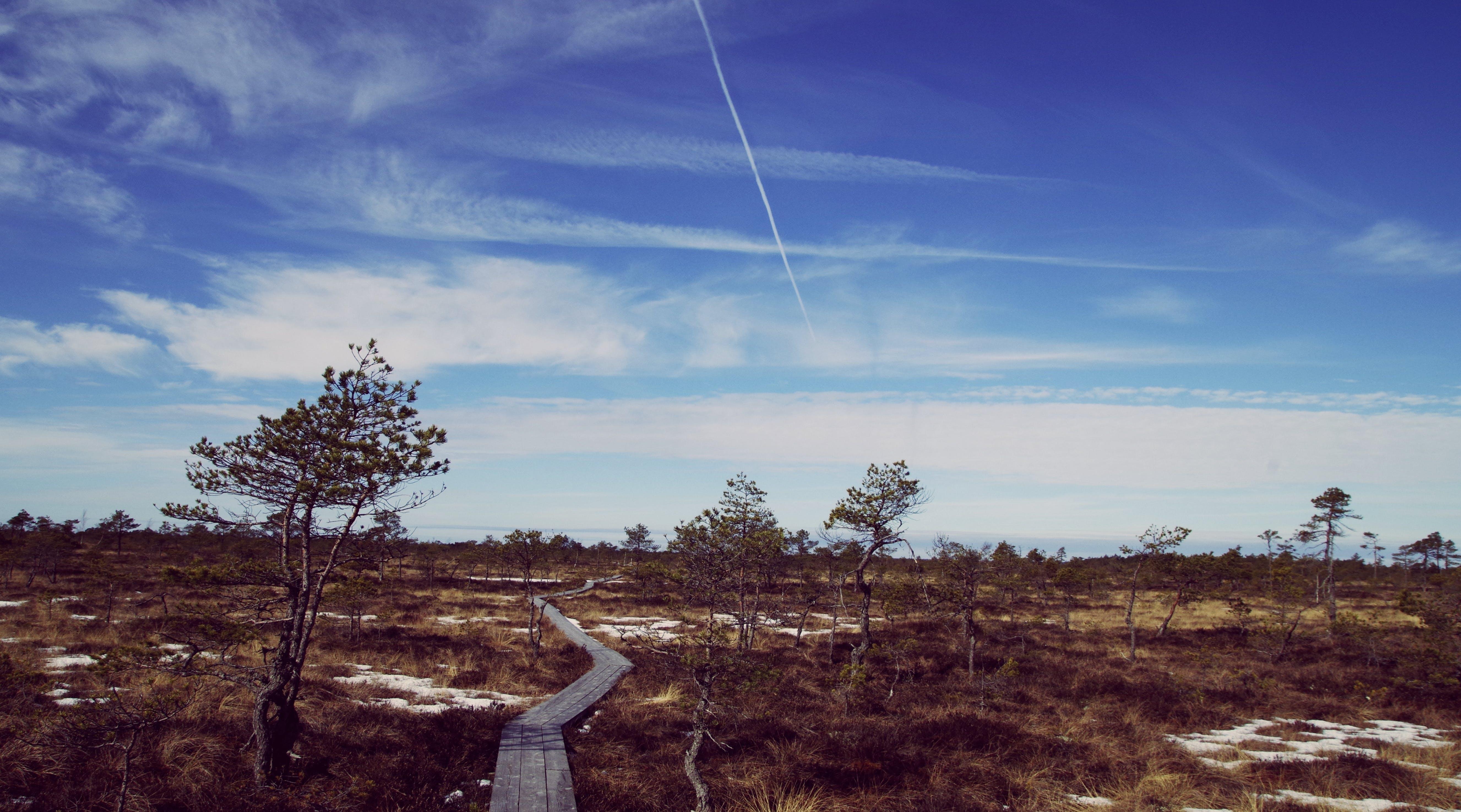 Kostenloses Stock Foto zu abend, ackerland, bäume, dämmerung