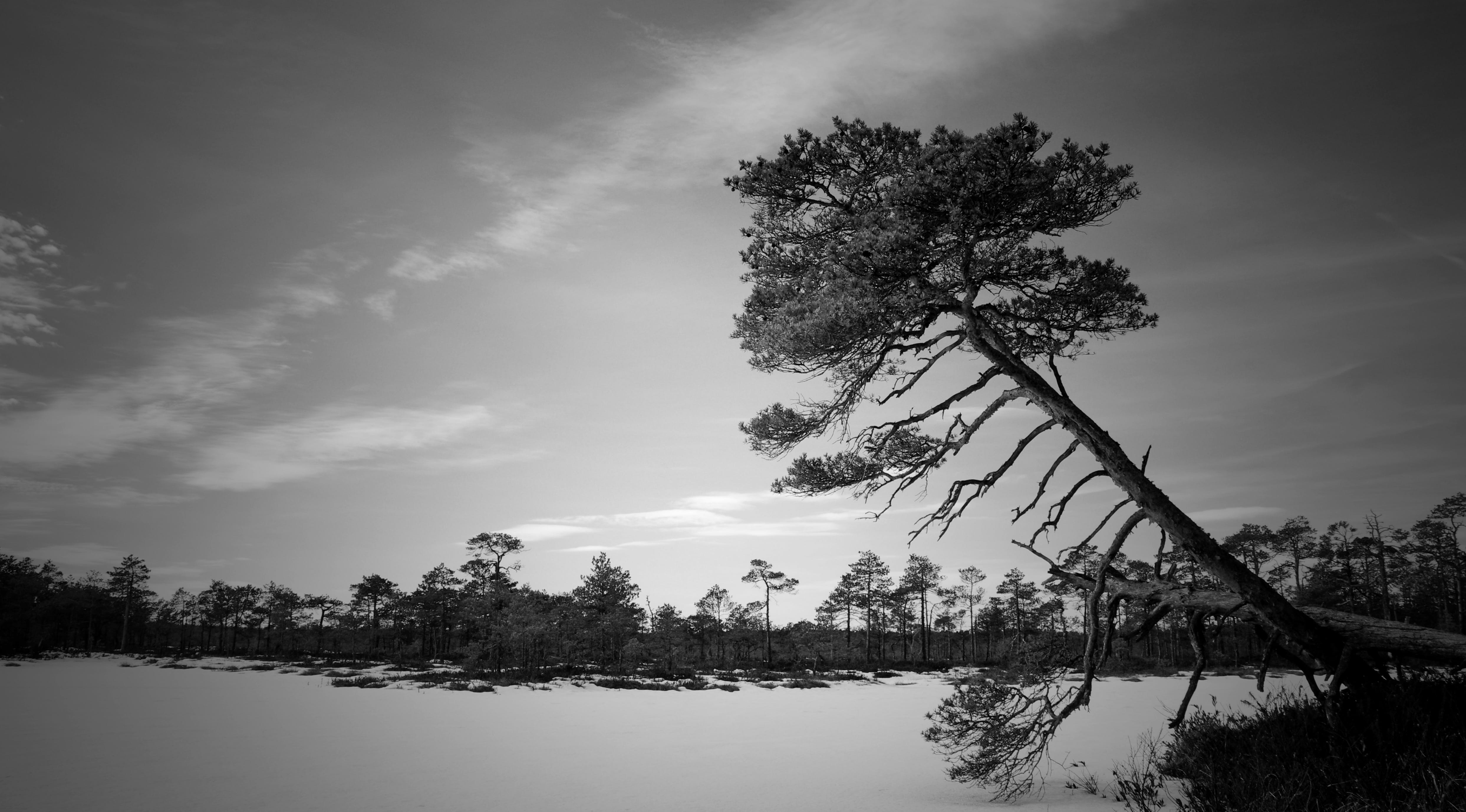 下雪的, 冬季, 單色, 天性 的 免费素材照片