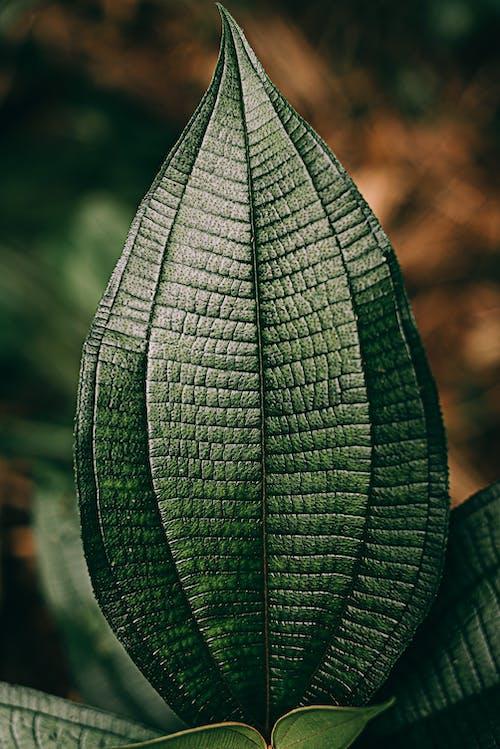 Photos gratuites de abstrait, arbre, biologie