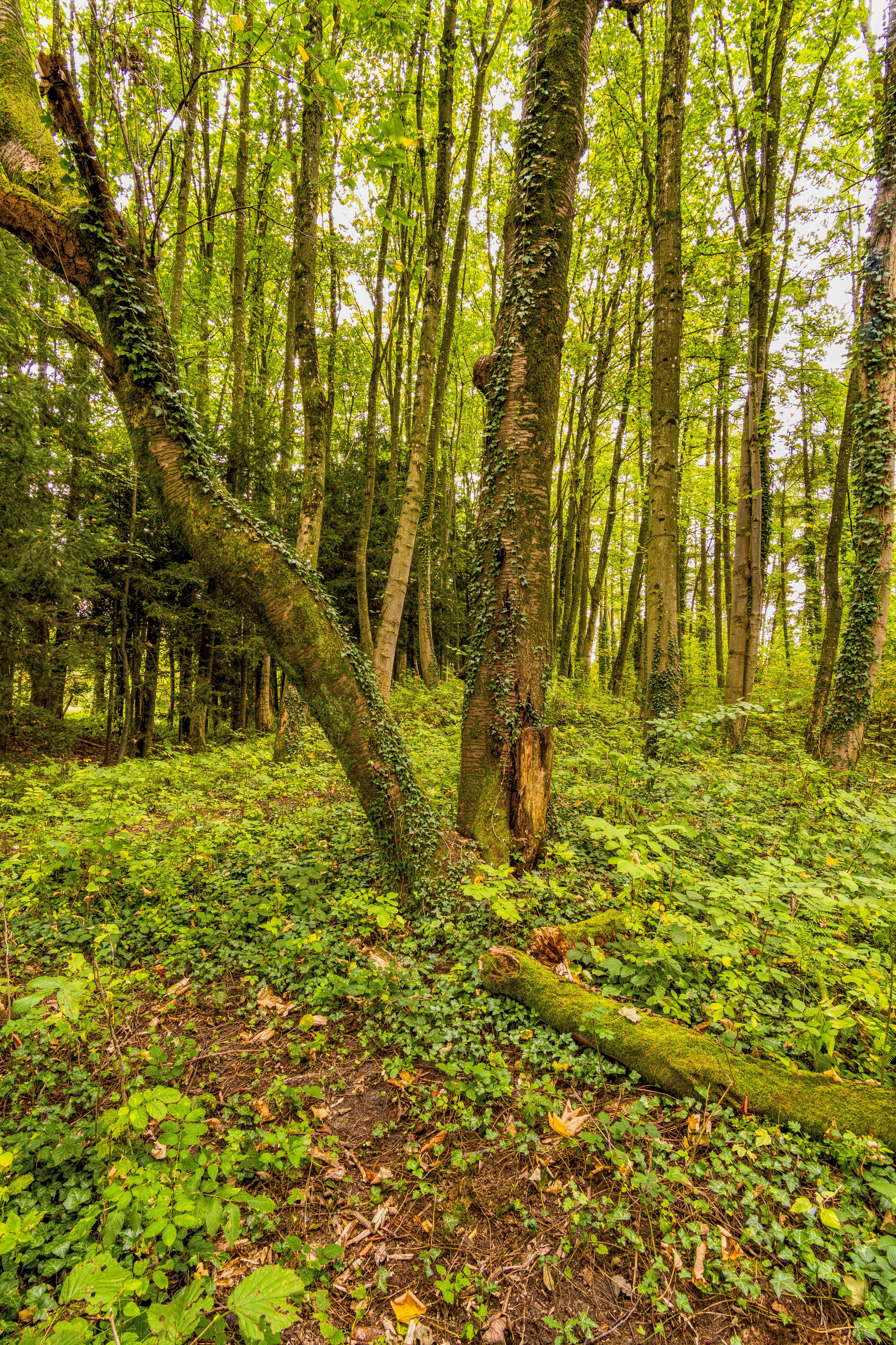 of away, forest, forest floor, green