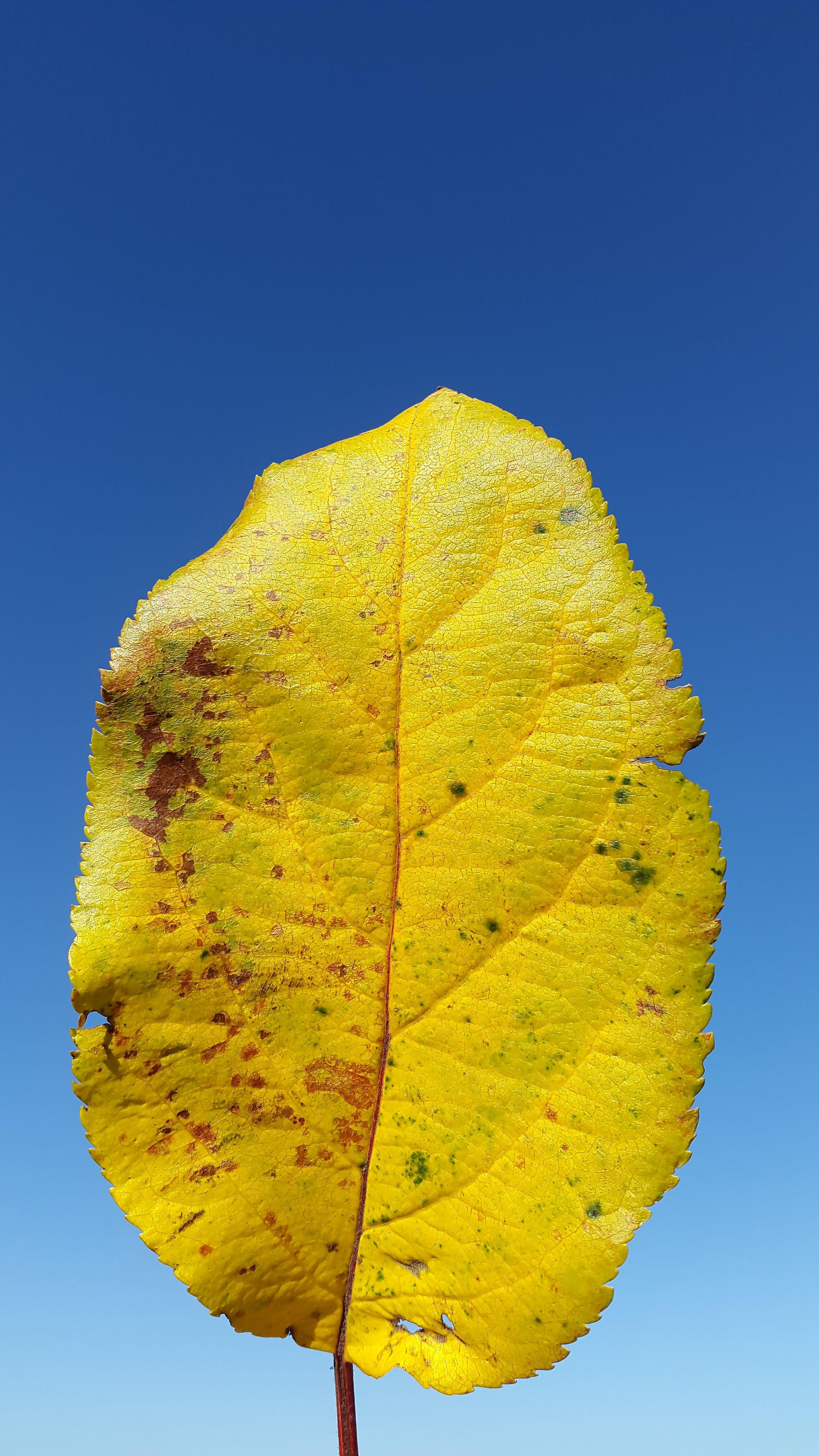 Free stock photo of deciduous tree, environment, environmental protection, grow