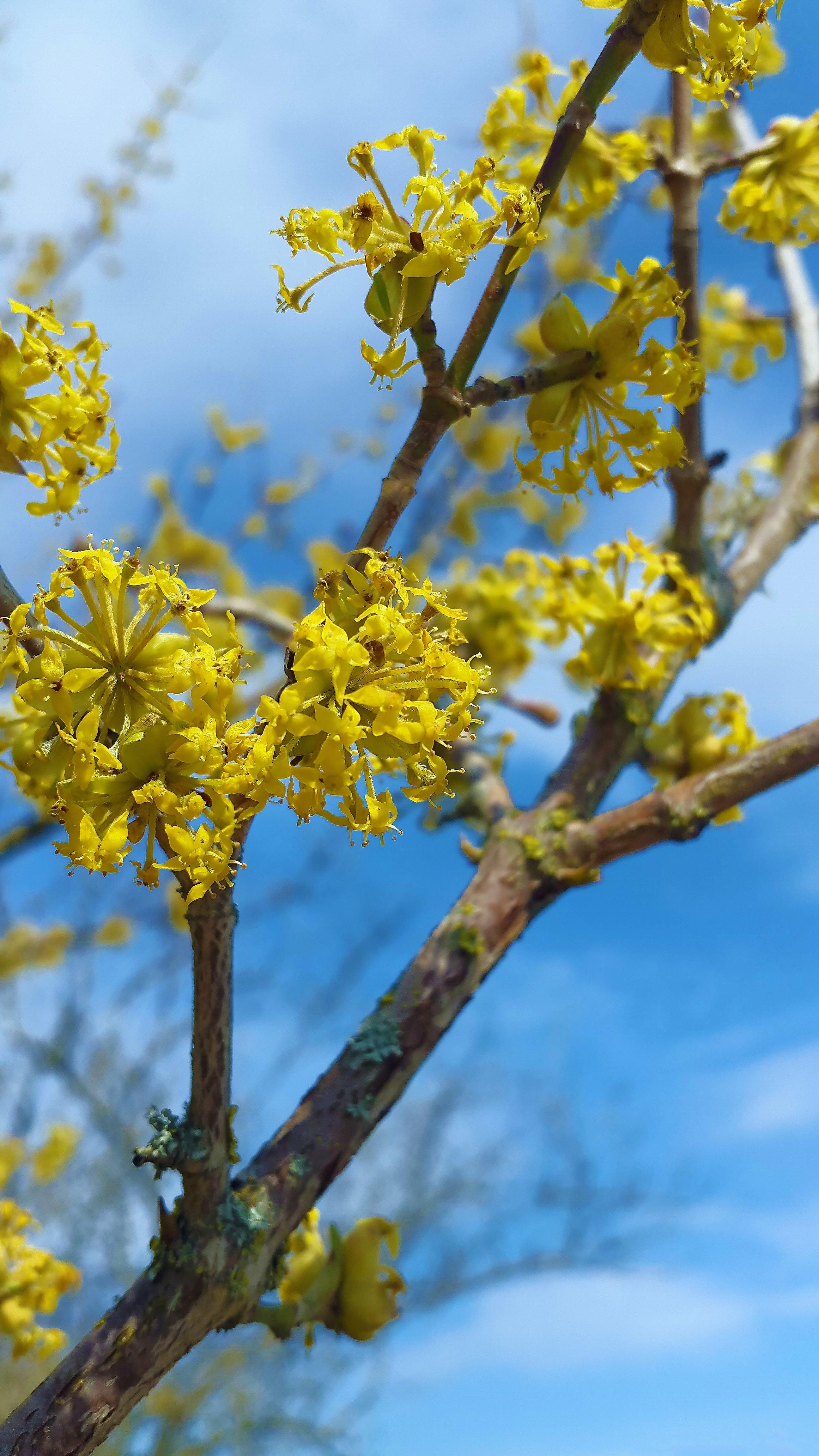 Free stock photo of beautiful, bloom, blossom, bright yellow