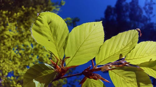 Free stock photo of beech, beech leaves, bright, deciduous forest