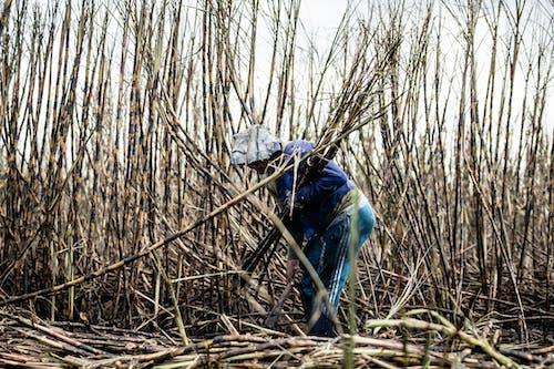 Darmowe zdjęcie z galerii z atmosfera pracy, bambus, ciężka praca